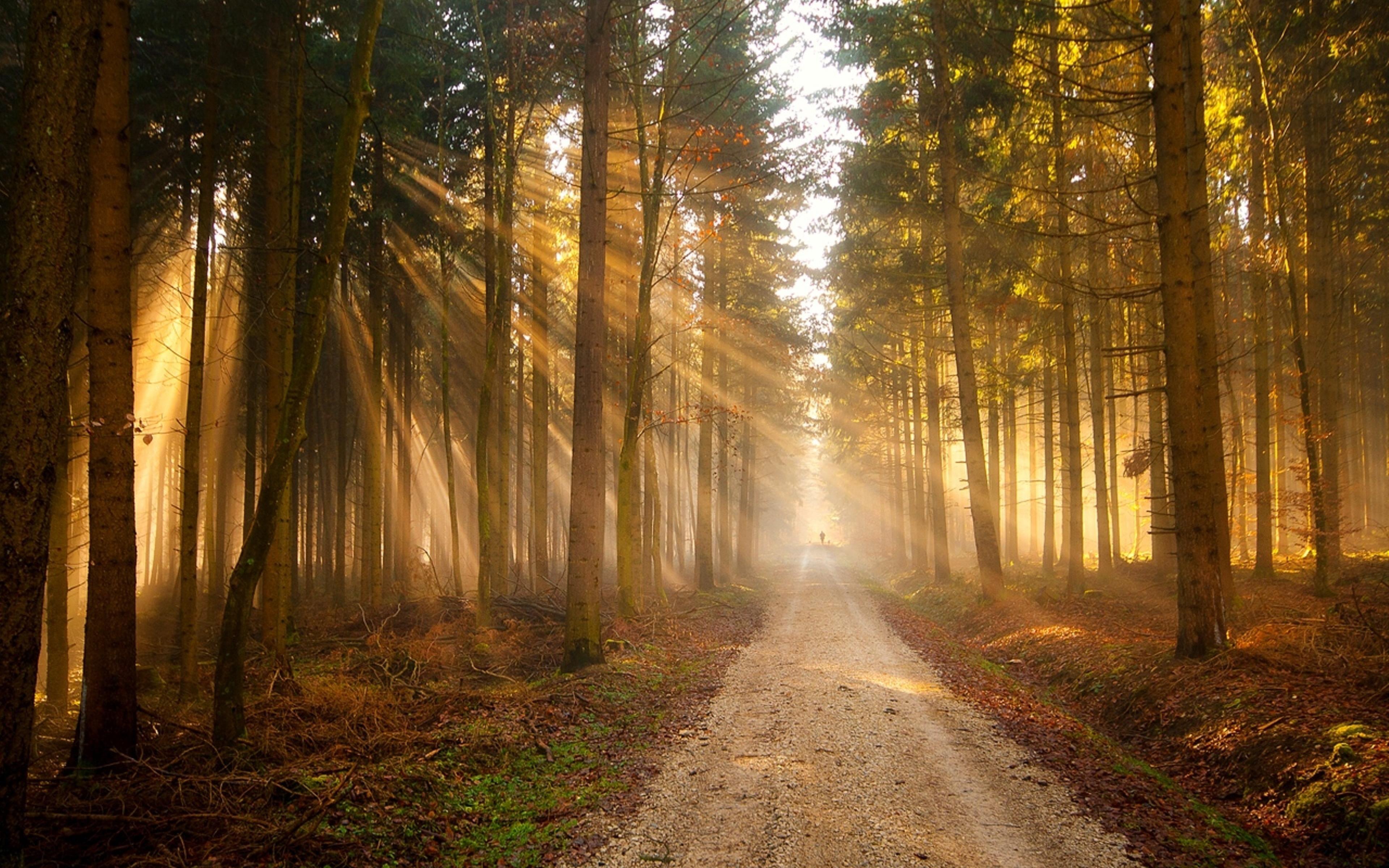 густой лес тропа природа без смс